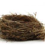 Bird's Nests and Healing Hearts